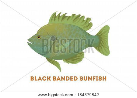 Isolated sunfish fish on white background. Fresh food.