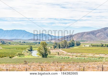 A farm landscape with vineyards and orchards near Bonnievale in the Western Cape Province