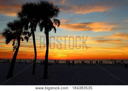 A sunset afterglow at a local beach with palm trees in silhouette.
