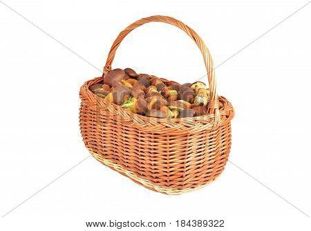 Boletus Edulis Mushroom In Basket