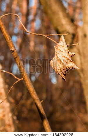 Withered autumn leaves on a tree branch