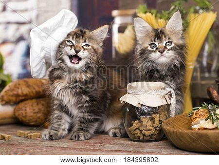 Kittens in a chef's cap and a piece of cheese