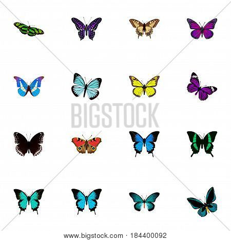 Realistic Beauty Fly, Copper, Lexias And Other Vector Elements. Set Of Moth Realistic Symbols Also Includes Fly, Brown, Beautiful Objects.