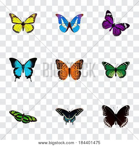 Realistic Papilio Ulysses, Archippus, Morpho Hecuba And Other Vector Elements. Set Of Beautiful Realistic Symbols Also Includes Monarch, Purple, Fly Objects.