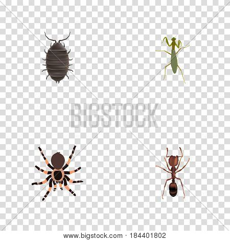 Realistic Dor, Emmet, Tarantula And Other Vector Elements. Set Of Hexapod Realistic Symbols Also Includes Spider, Emmet, Locust Objects.