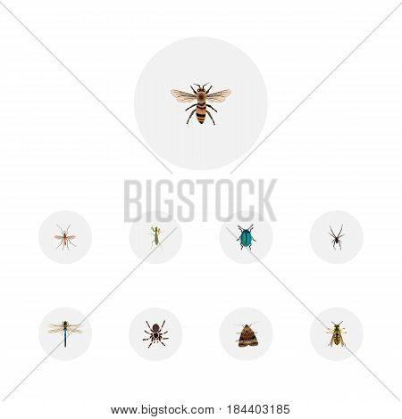 Realistic Bug, Bee, Grasshopper And Other Vector Elements. Set Of Bug Realistic Symbols Also Includes Wasp, Locust, Sting Objects.