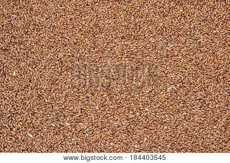Wheat grains texture background, top view .