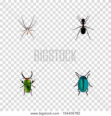 Realistic Bug, Spider, Ant And Other Vector Elements. Set Of Bug Realistic Symbols Also Includes Arachnid, Dor, Ant Objects.