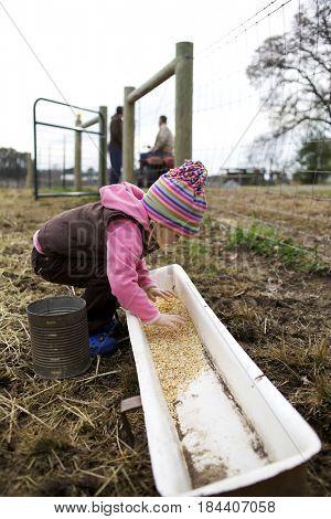 Caucasian girl placing grain in trough
