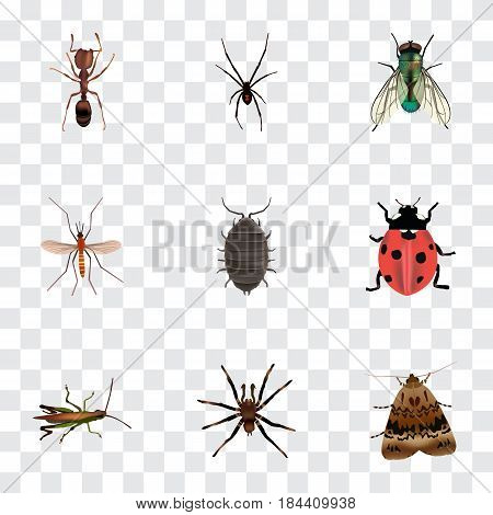 Realistic Dor, Housefly, Butterfly And Other Vector Elements. Set Of Bug Realistic Symbols Also Includes Grasshopper, Spider, Locust Objects.