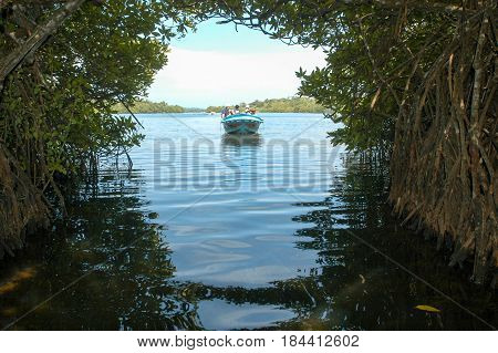 The Mangroves Of Bentota In Sri Lanka