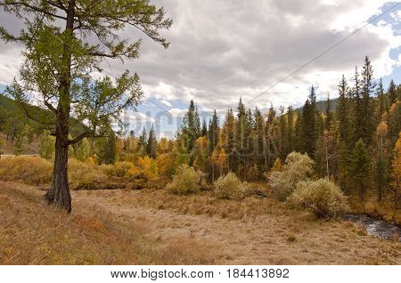 Autumn in the mountains, yellowed forest and low-reaching clouds
