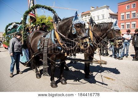 Tittmoning,Germany-April 30,2017: Close up of two horses pulling a carriage at the annual St.George's parade