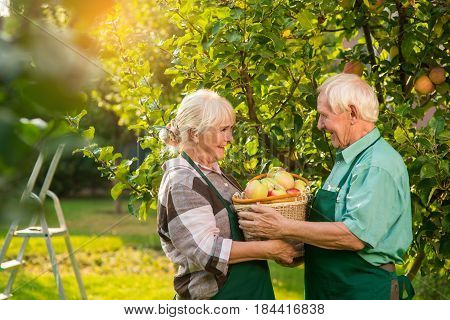 Senior couple holding apple basket. Woman and man smiling outdoors. Fruit gardening guide.