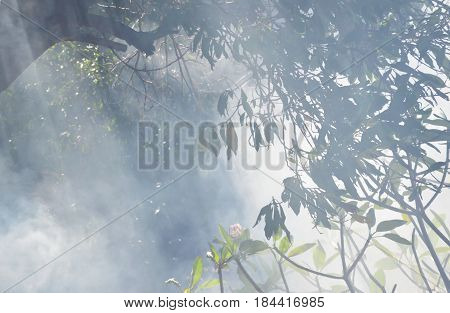 smoke from leaf burning in the garden