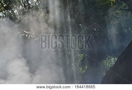 sunlight through smoke from leaf burning in garden