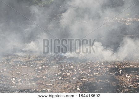 smoke from leaf burning on ground in garden
