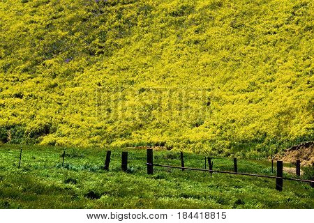 Abandoned ranchland with a rustic dilapidated wooden fence surrounded by lush green grasslands with wildflowers during spring taken in the Carrizo Plain, CA