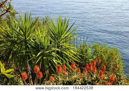 Seaside aloe flowers green plants, Monaco seaview