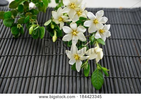 Branch gardenia with black stones on mat background