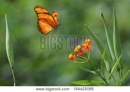 Butterfly in flight about to land on a flower