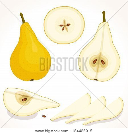Vector pear. Set of whole, sliced, half of pears isolated on white background. Illustration.