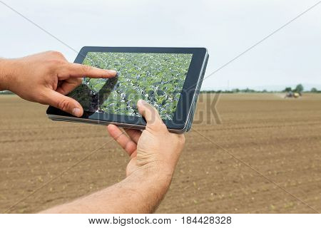 Smart Agriculture. Farmer Using Tablet Cabbage Planting. Modern Agriculture Concept.