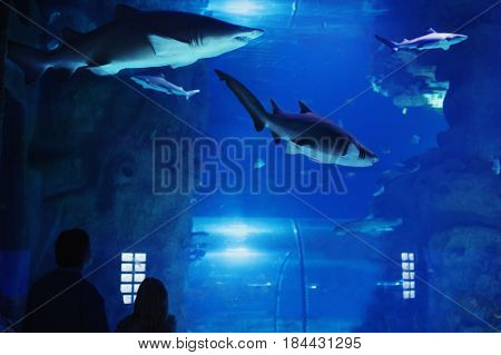 father with child visitors a large oceanarium