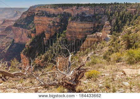 the rugged beauty of the grand canyon landscape from the south rim