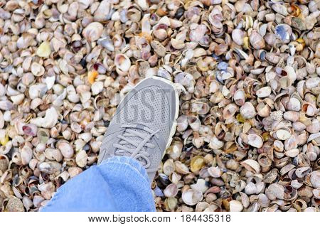 A generic gray sneaker stepping on many different colors and types of seashells on Silver Sands State Park beach in Milford Connecticut.
