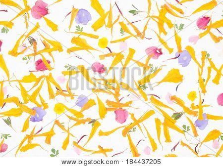 Petals of withered flowers on a white background