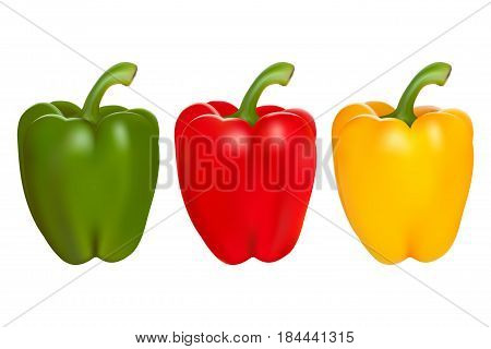 Set of red green and yellow peppers vector realistic illustration isolated on white background