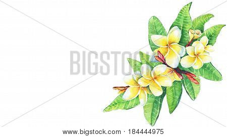 Greeting card of tropical resort flowers frangipani plumeria. Hand drawn watercolor painting on white background.