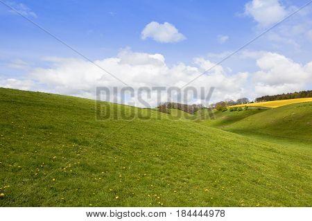 Green Grazing Pastures