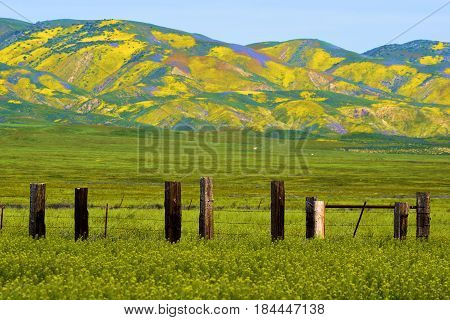 Forgotten abandoned ranchland including a rustic wooden fence on a lush green prairie with wildflowers taken in the Carrizo Plain, CA