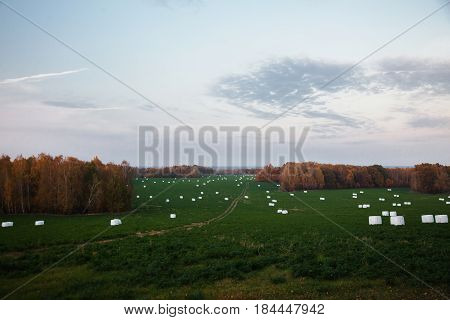 Yellow orange autumn trees with the warm light of the setting sun in field. Beautiful scenic view in field. Beautiful landscape. Hilly terrain. The road into the field. Forage for animals in field