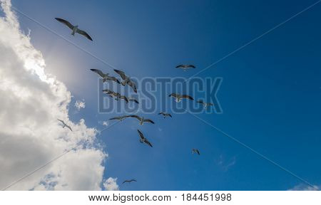Natur background with seagulls flying high in the clouds