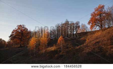 Autumn forest. Yellow orange autumn trees with the warm light of the setting sun. Autumn foliage. Autumn park. Beautiful scenic autumn view. Beautiful autumn landscape. Autumn tree. Autumn sky.