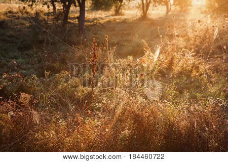 Morning landscape. Warm morning sunlight. Dew on the grass. Web hanging on grass in morning.
