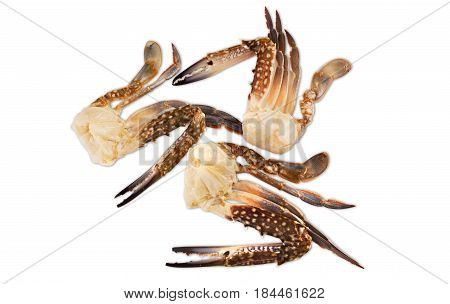 Three claws of a blue crab on a white background