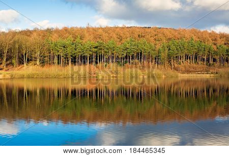 Autumn woodland reflected in a calm lake