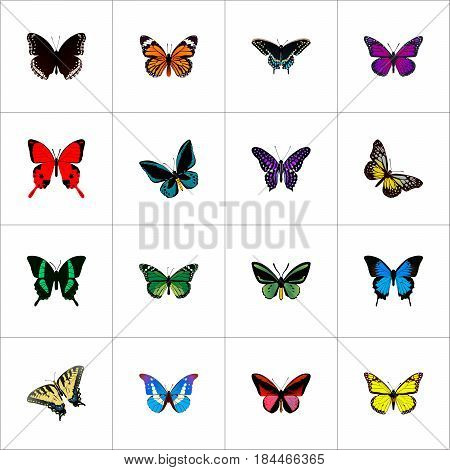 Realistic Morpho Hecuba, Birdwing, Tropical Moth And Other Vector Elements. Set Of Beautiful Realistic Symbols Also Includes Violet, Tropical, Bluewing Objects.