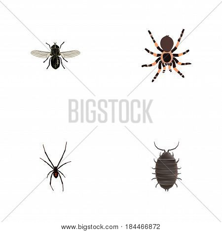 Realistic Tarantula, Midge, Dor And Other Vector Elements. Set Of Animal Realistic Symbols Also Includes Bug, Gnat, Beetle Objects.