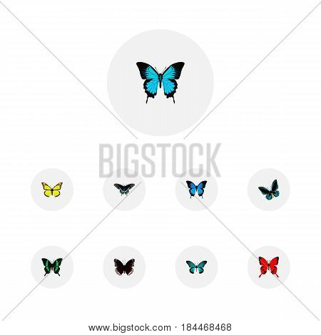 Realistic Archippus, Beauty Fly, Pipevine And Other Vector Elements. Set Of Beautiful Realistic Symbols Also Includes Cypris, Yellow, Sky Objects.