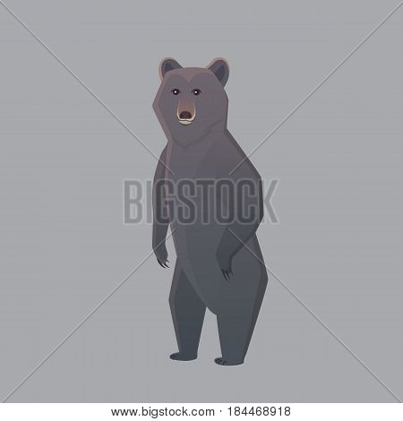 Black american bear. Vector illustration Grizzly isolated