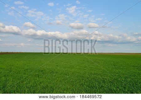 spring green field blue sky countryside landscape