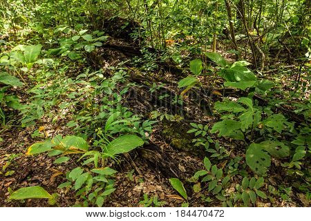 Forest Bioma Cerrado In Goias