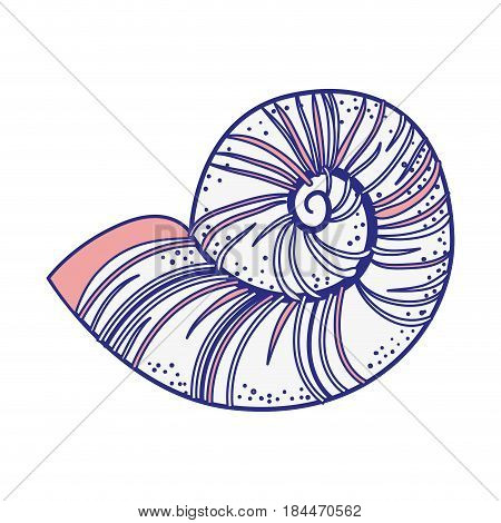 sea snail icon over white background. vector illustration