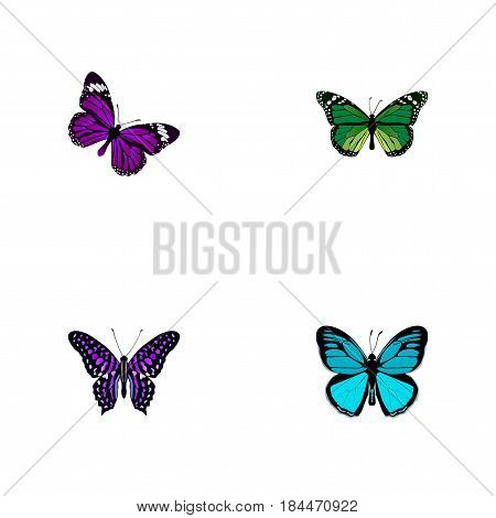 Realistic Sky Animal, Butterfly, Birdwing And Other Vector Elements. Set Of Butterfly Realistic Symbols Also Includes Beautiful, Butterfly, Purple Objects.