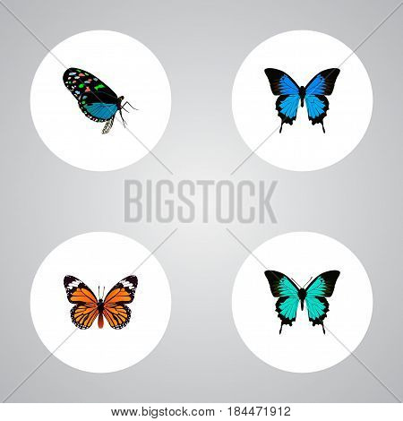 Realistic Monarch, Common Blue, Hairstreak And Other Vector Elements. Set Of Moth Realistic Symbols Also Includes Hairstreak, Bluewing, Butterfly Objects.